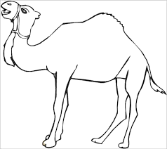 Small Picture Wild Animal Coloring Pages Desert Camel Coloring Page And Kids