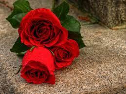 Download Rose Flower Background Images ...