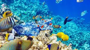 Underwater World HD Desktop Wallpaper ...