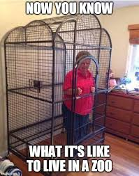 Search, discover and share your favorite lockdown gifs. 10 Lockdown Quarantine Self Isolation Memes Jokes The Travel Tart Blog