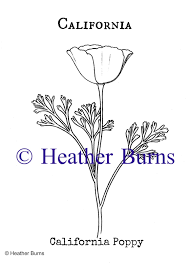 California State Flower Poppy Coloring Page