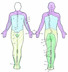 Nerve Chart Leg Low Back And Leg Pain Is Lumbar Radiculopathy