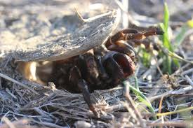 tags insects spiders nocturnal carnivore predator venomous