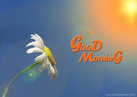 during sunrise good morning flower wallpaper in high quality