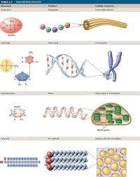 carbohydrates and lipids venn diagram