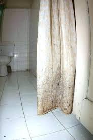 mold on shower curtain moldy shower curtain three seasons hotel lovely shower curtain mold anyone clean mold on shower curtain