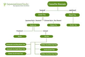 Japanese Green Tea Simply Explained Japanesegreentea In