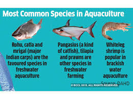 Catfish Chart Fish Farms To Produce Nearly Two Thirds Of Indias Fish