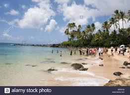 People Watching Green Sea Turtles Swimming Laniakea Beach