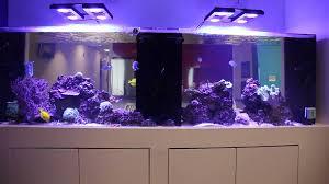 aquarium for office. Aquarium For Office R