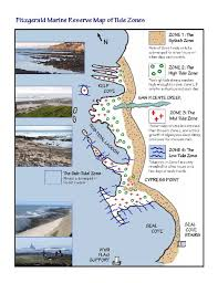 Moss Beach Tide Chart Visit The Tidepools Friends Of Fitzgerald Marine Reserve