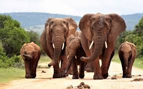 Elephant Family 4k Ultra HD Wallpaper ...