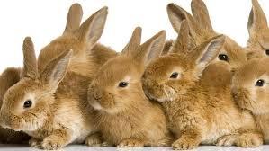 Resultado de imagen de conejos