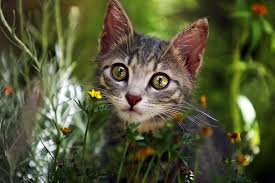 Methimazole Allergy in Cats - Symptoms, Causes, Diagnosis, Treatment ...