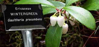 garden labels. Gardenmarkers Plant Label Label. Professionally Engraved Markers Garden Labels
