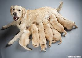 Image result for puppy with mom