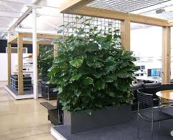 100  Best Indoor Trees   The Best Indoor Plants For Lazy Climbing Plants Indoor