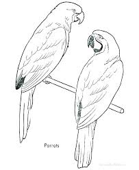Free Printable Bird Coloring Pages Bird Coloring Pages Free For