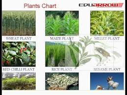 Plant Chart Plants Chart Learn Plant Names