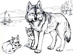 Cool Animal Coloring Pages Courtoisiengcom