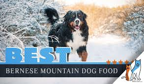 Canidae Dog Food Feeding Chart 15 Best Dog Foods For Bernese Mountain Dogs 2019 Feeding Guide