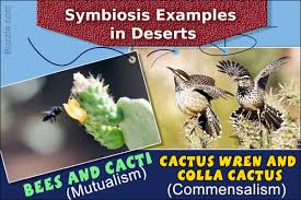 symbiotic relationships a brief synopsis of the symbiotic relationships in the desert