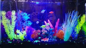 Glofish Light Bar My Glofish Aquarium Home Aquarium Aquarium Fish Fish