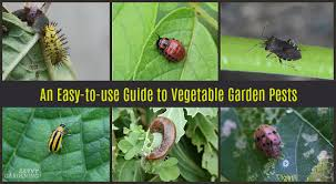 Bug Id Chart Guide To Vegetable Garden Pests Identification And Organic
