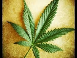 Marijuana Facts and Fiction 101