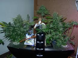 aerogarden weed harvest. original aero garden weed | 600x450 aerogarden harvest p