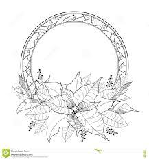 Vektor Poinsettia Oder Weihnachtsstern Blätter Und