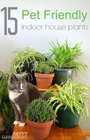 home plants that are poisonous philodendrons household plants poisonous to cats