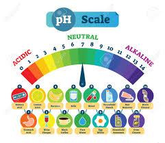 Ph Reading Chart Ph Acid Scale Measurement Vector Illustration Diagram With Acidic