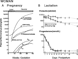 Estrogen And Progesterone Levels In Pregnancy Chart Hormone Levels During Pregnancy And Lactation In The Woman