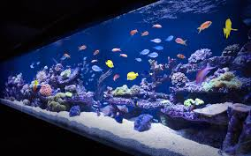 Cool Aquariums Cool Fish Tanks In Esquire Uk Aquarium Architecture