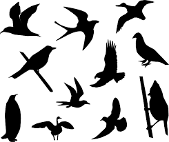 flying birds tattoo clipart. Unique Flying Cartoon Bird Tattoo  Clipartsco Intended Flying Birds Clipart L