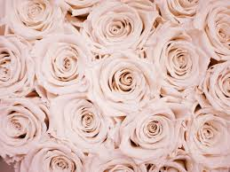 free rose gold wallpapers hd