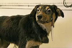 Павлов Иван Петрович Википедия Собака Павлова Музей Павлова 2005 год