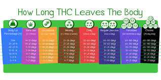 Thc Body Fat Chart Get Em High How To Detox From Marijuana When You Have A