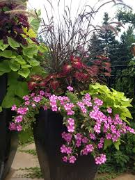 460 Best Container Plants For Full Sun Images On Pinterest Container Garden Ideas Full Sun