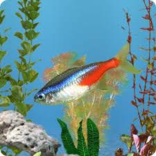 freshwater wallpaper. Simple Freshwater AniPet Freshwater Aquarium Live Wallpaper To