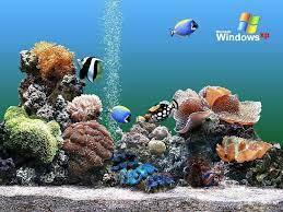 Aquarium Backgrounds Pictures ...