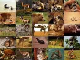 животных реферат Размножение животных реферат