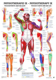 Canine Trigger Point Chart Trigger Points Arms And Legs Laminated Chart
