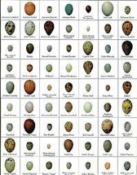 Egg Identification Chart Bird Egg Identifier Bird Egg Identification Identify Bird