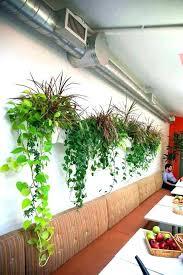 wall mounted plant pots wall mounted plants wall mounted planters an office with wall mounted planters wall mounted plant pots wall mounted plants