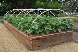 stylish raised vegetable garden beds