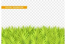 grass transparent background. Grass, Shape Plant Leaves Border Isolated Grass Transparent Background