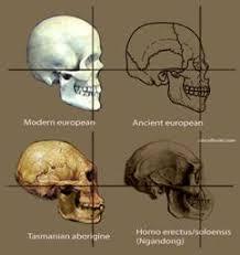 """Происхождение человека от обезьяны факт гипотеза или миф   что вы видите """"не людей Так выглядели тасманийцы еще в конце xix века Современные тасманийцы потомки тех кто смешались с приехавшими на о"""