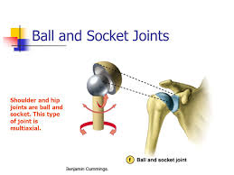 ball and socket joint. 31 ball and socket joint t